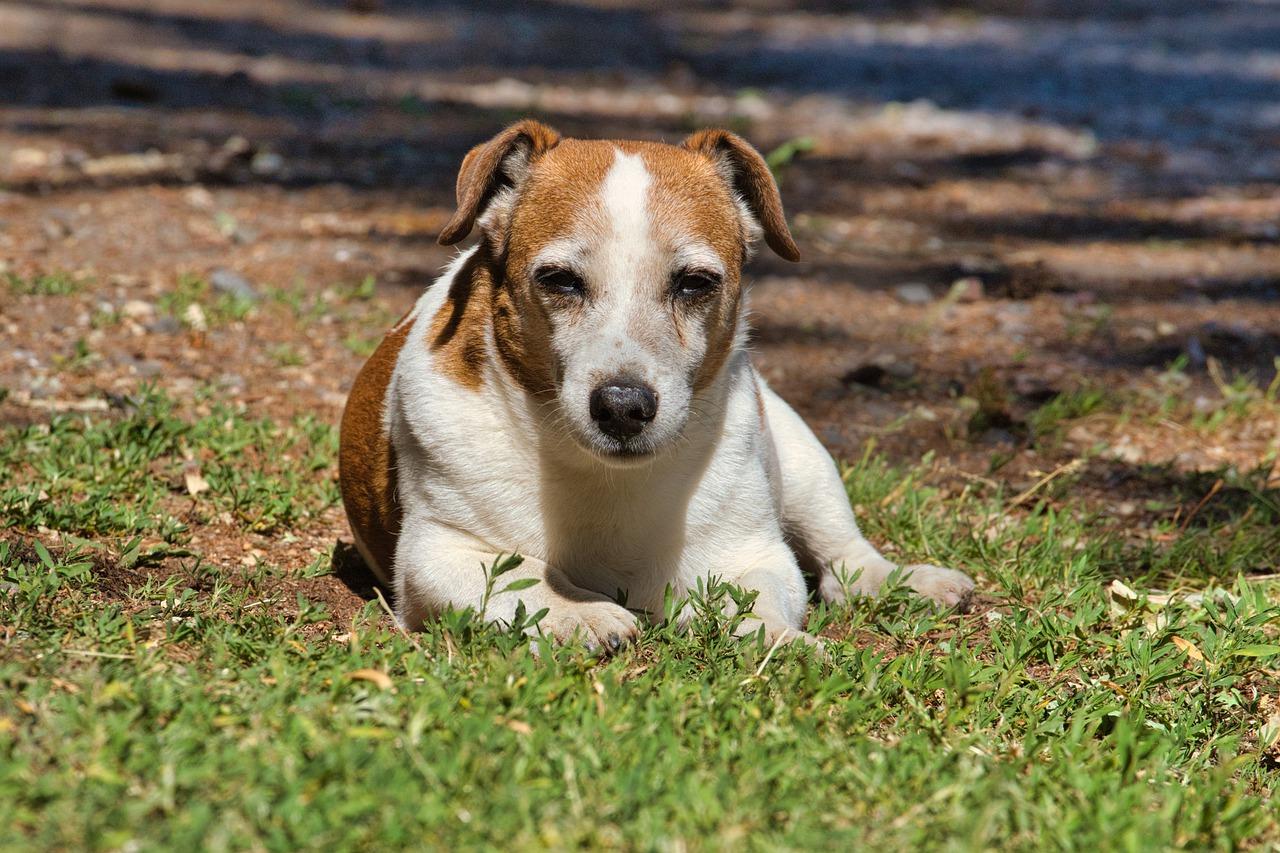 Суд обязал хозяина собаки выплатить 300 тысяч за нападение животного на девочку