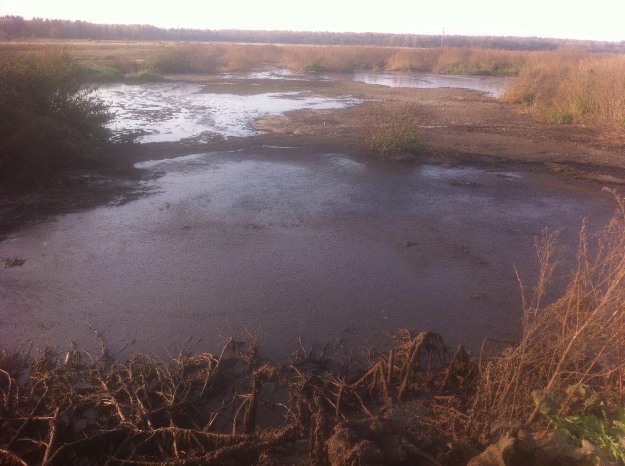 После сообщений в соцсетях департамент охраны окружающей среды начал проверку по факту слива нечистот под Ярославлем
