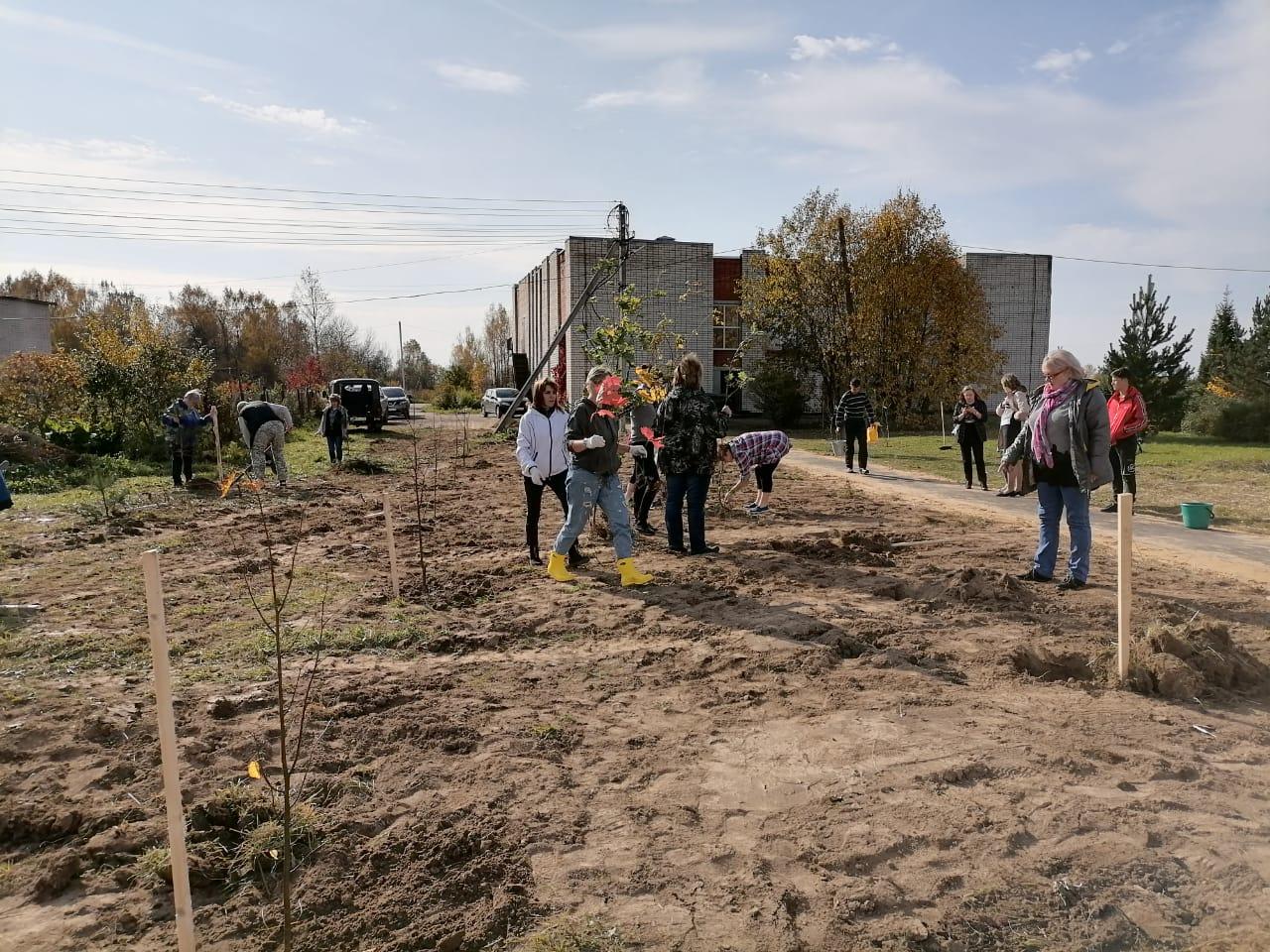 Около 20 тысяч деревьев посадили в Любимском районе в рамках акции «Сохраним лес – 2020»