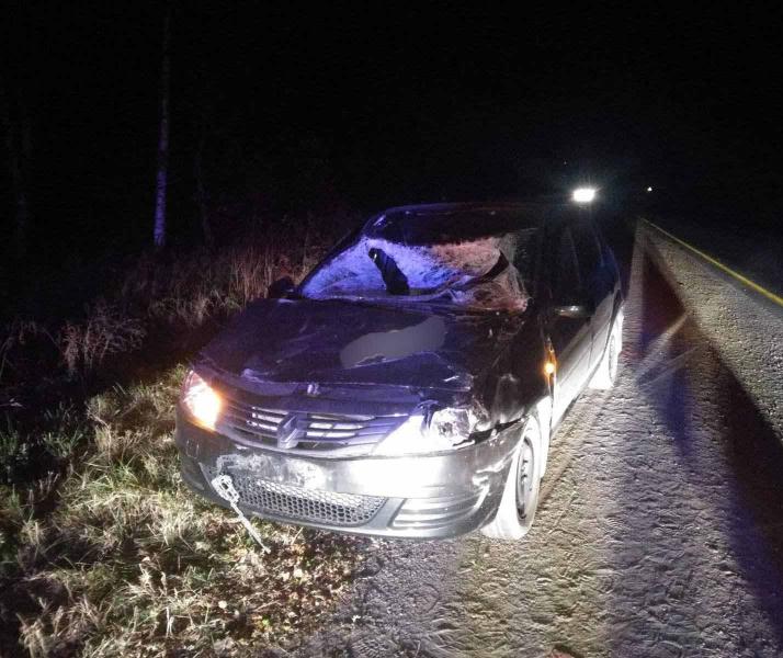 В Ярославском районе водитель иномарки сбил лося: пострадала пассажирка автомобиля