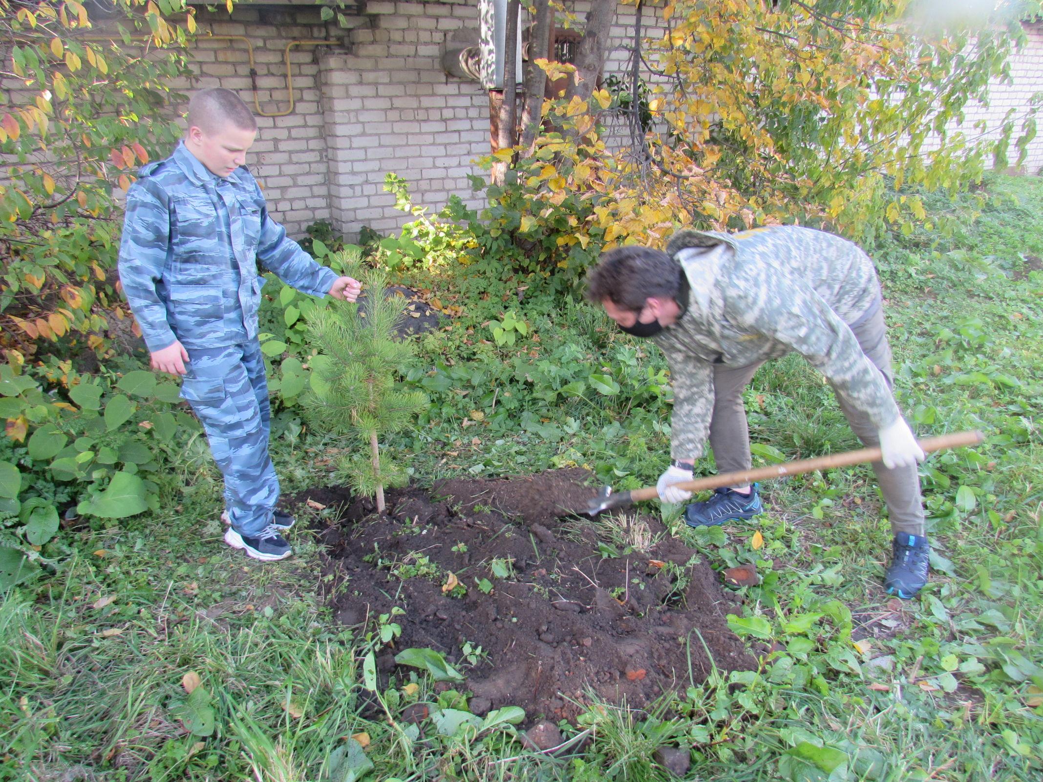 Воспитанники детского дома из Углича посадили аллею из 30 сосен