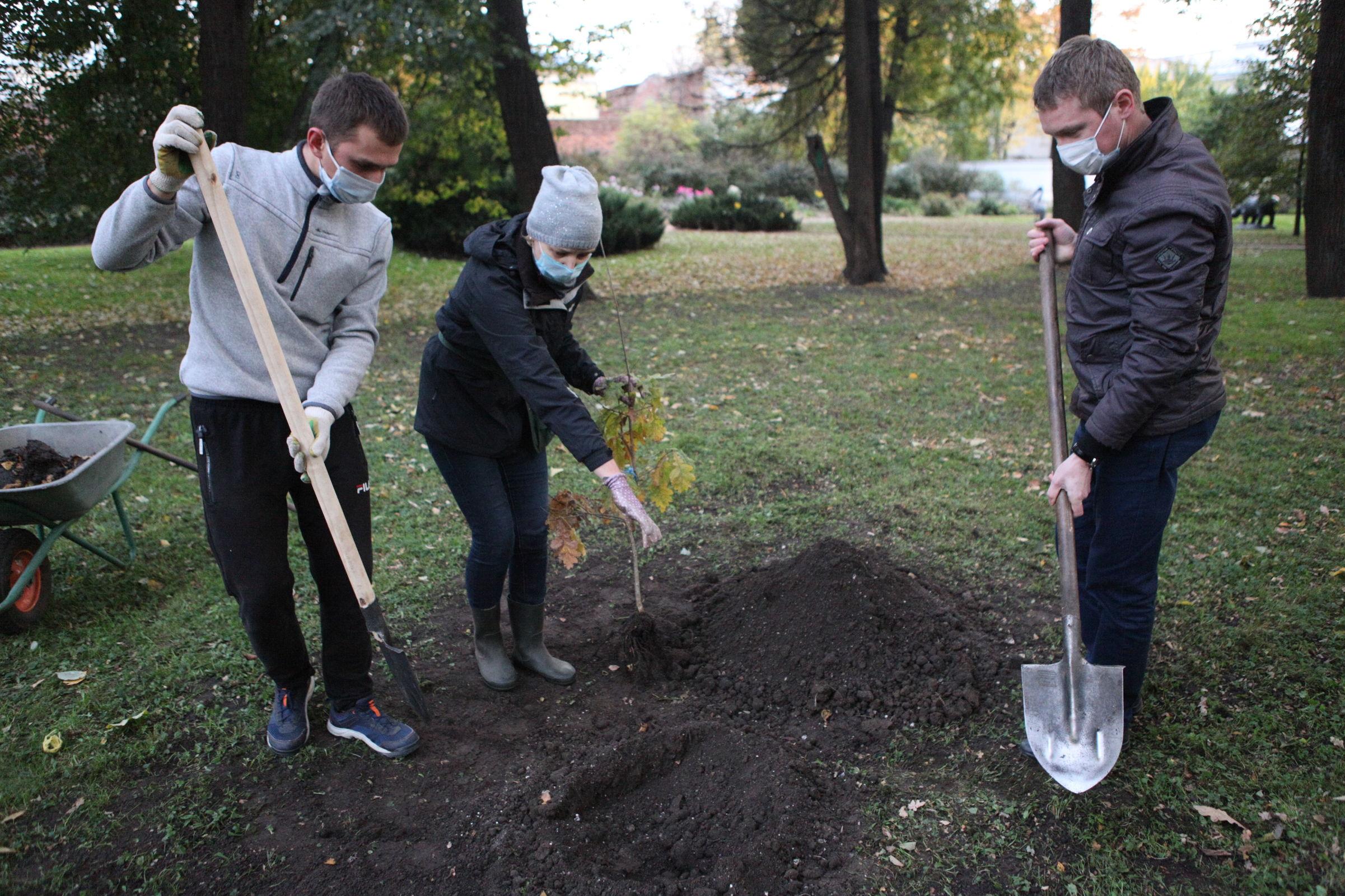 В центре Ярославля посадили саженец дуба от дерева времен Екатерины II