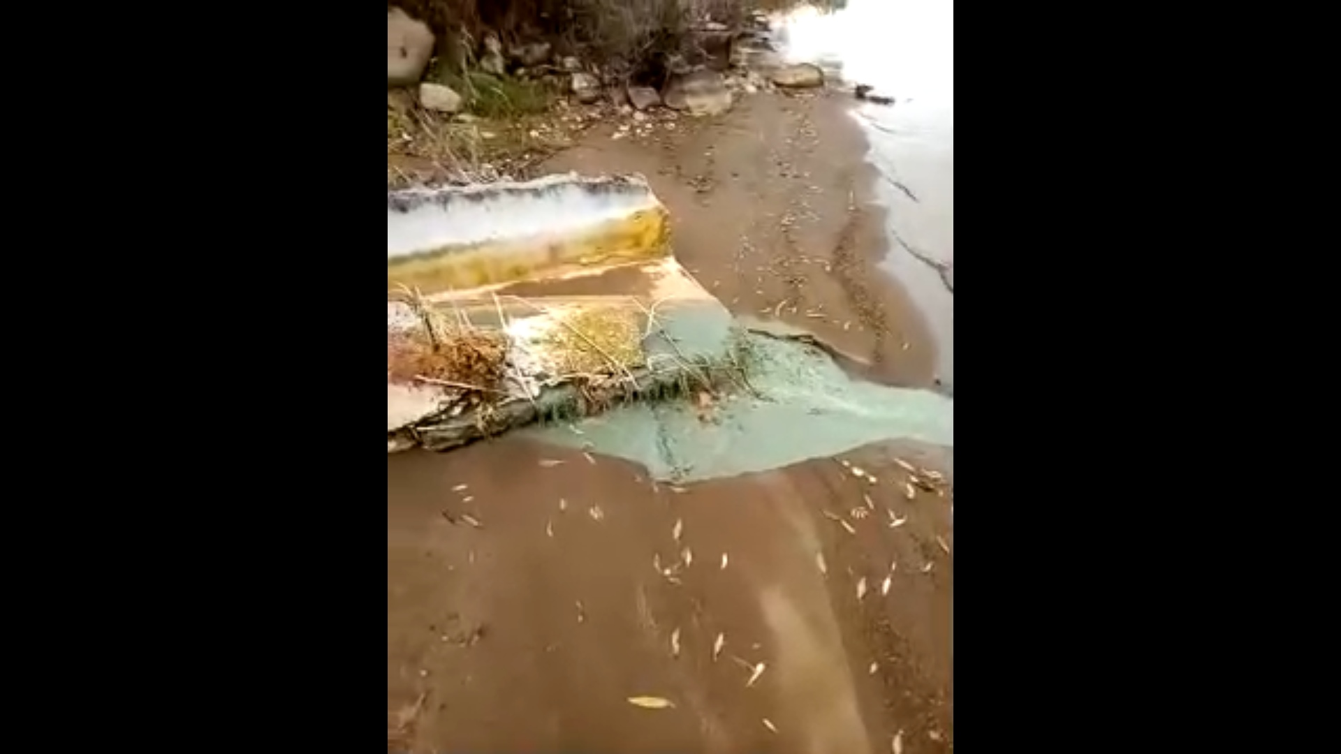 В Ярославской области начали проверку по факту слива в Волгу зеленой жидкости