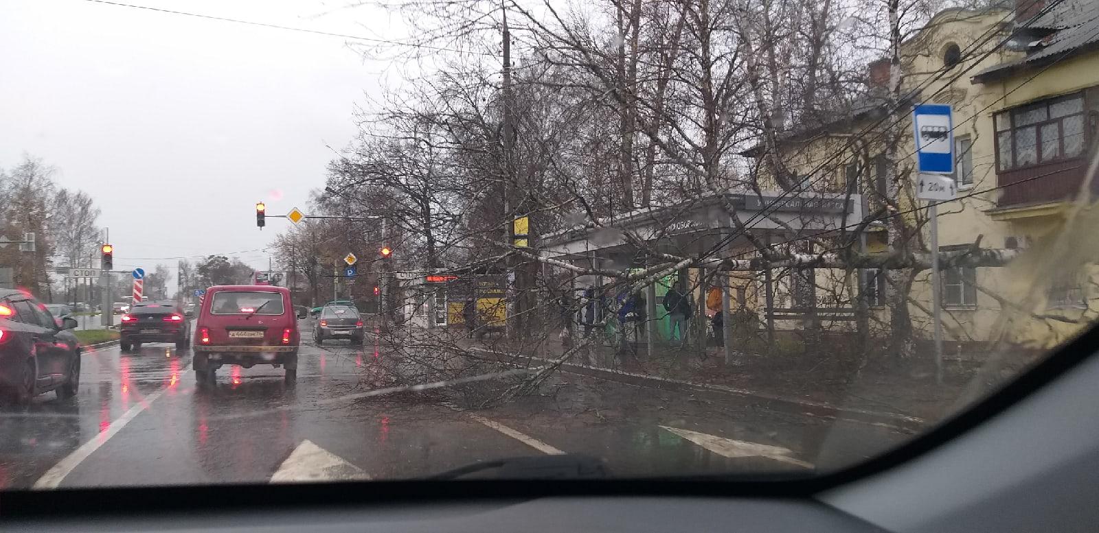 В Ярославле рядом с остановкой на провода упало дерево, перегородив часть дороги