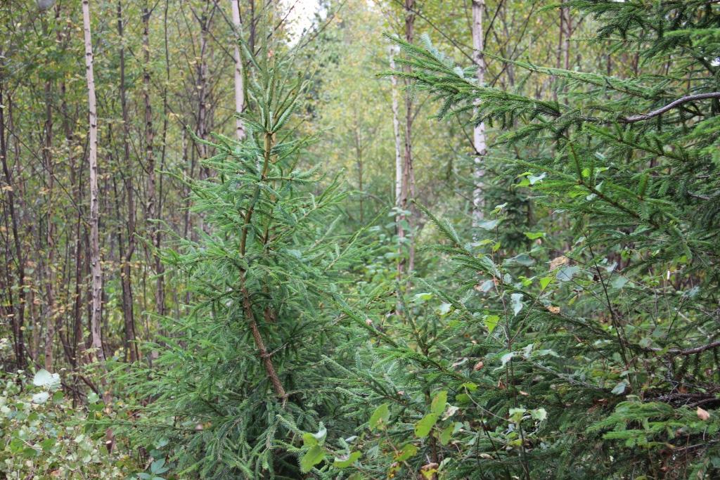 В Ярославской области продолжаются работы по лесовосстановлению