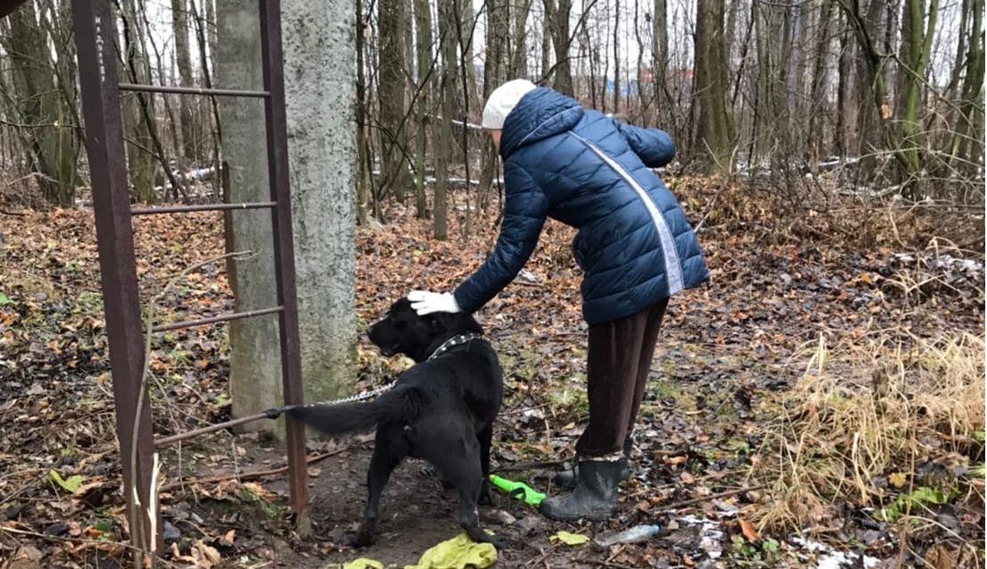 В Ярославле от холода и голода спасли привязанного в глухом месте лабрадора
