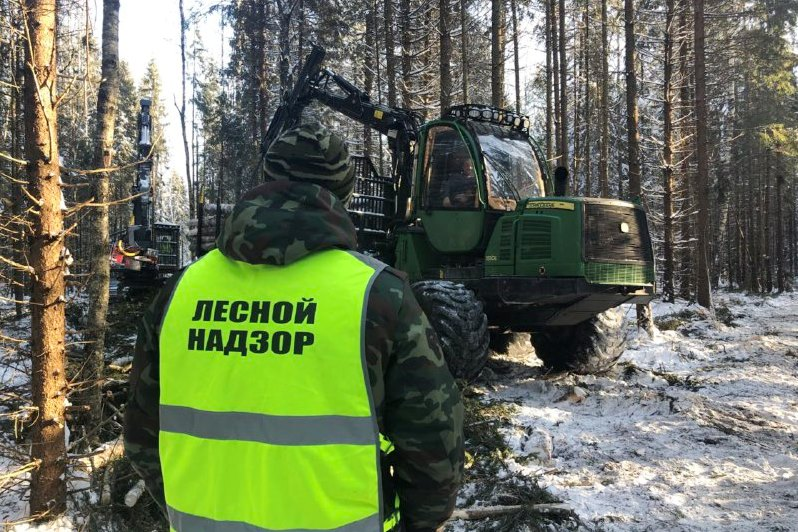 Нарушители лесного законодательства с начала года оштрафованы более чем на 7 миллионов рублей