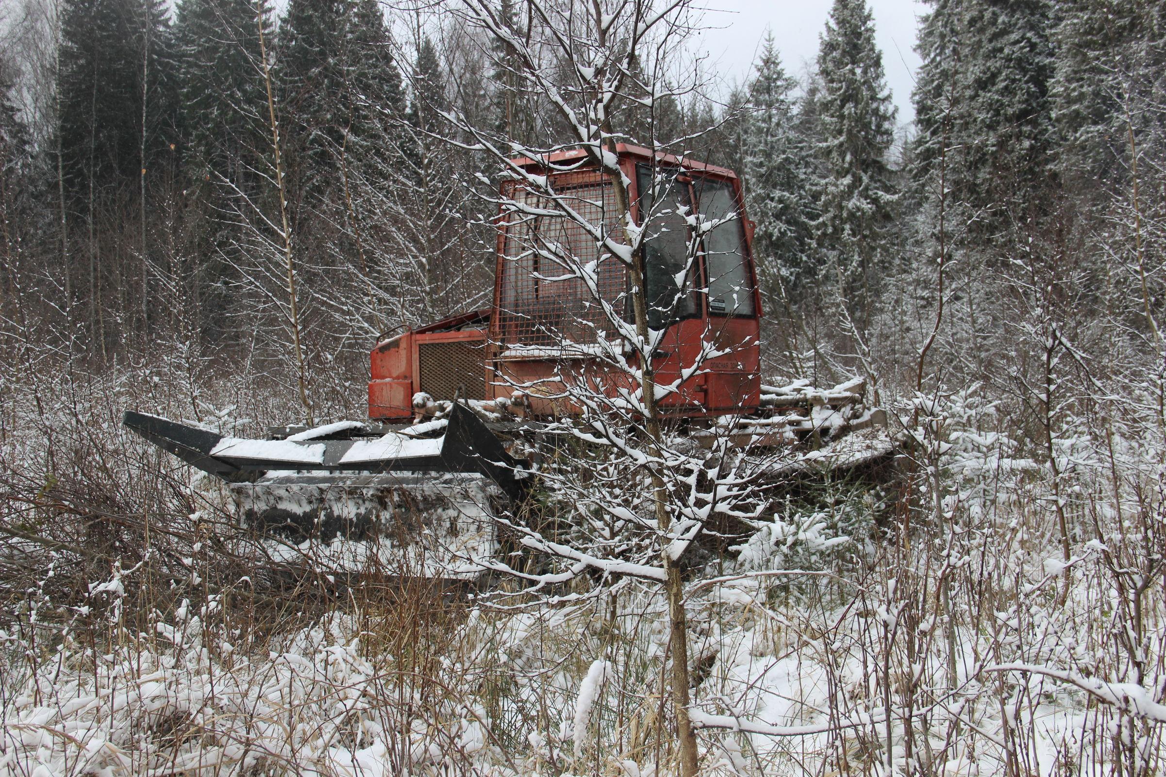 Работы по уходу за лесными культурами в регионе проведены на площади более 12 тысяч гектаров