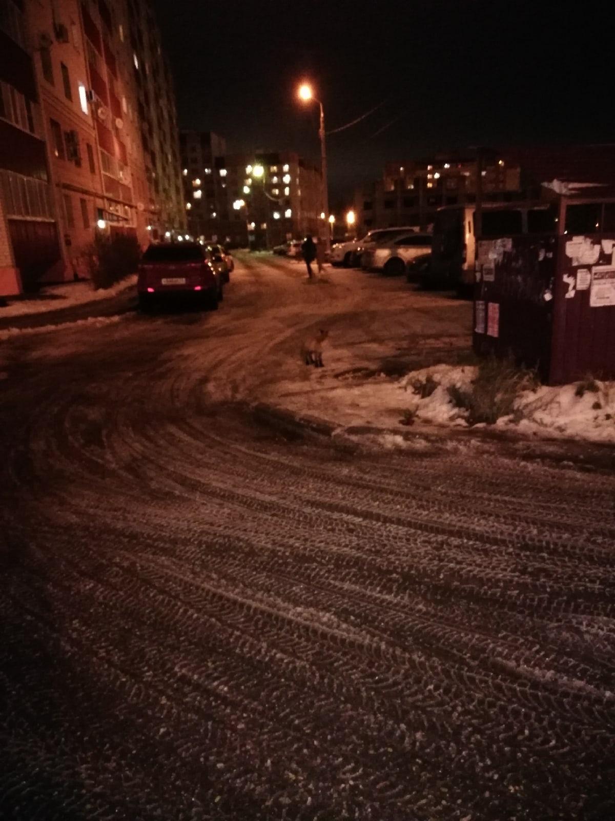 В Дзержинском районе поздним вечером ярославцы встретили лисенка