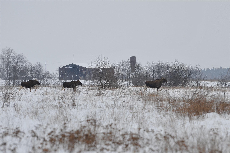 В ходе рейда в Некоузском районе задержали браконьера