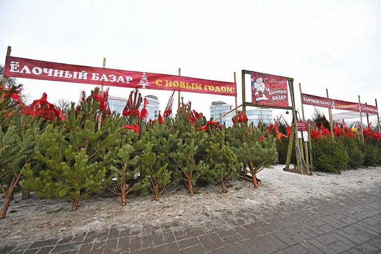 В Ярославле открыли 10 елочных базаров: адреса