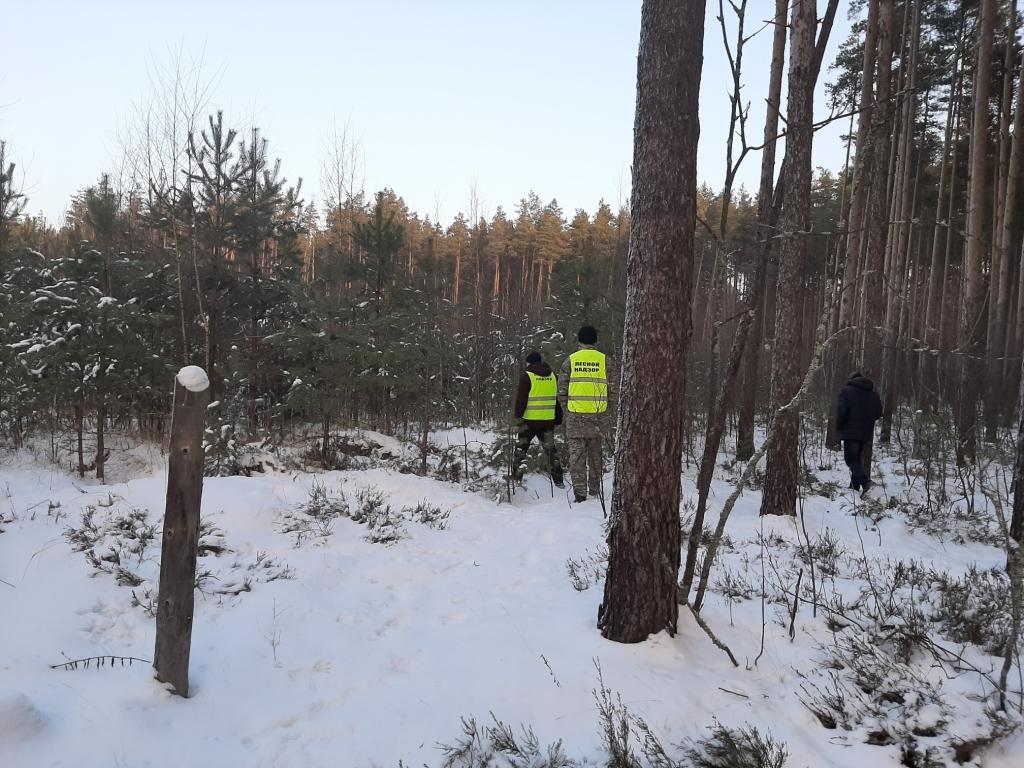 Лесные инспекторы пресекли две незаконные рубки в Мышкинском районе