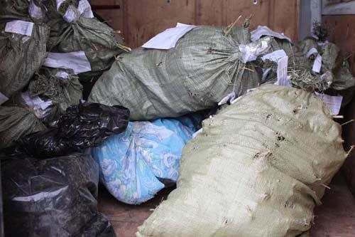 «Для корма домашним животным»: у жителя Ярославской области изъяли 12 килограммов конопли