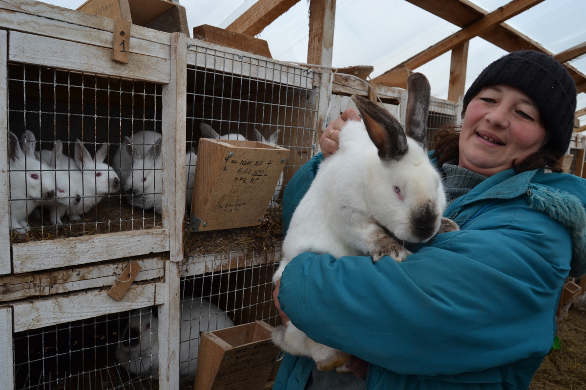В Ярославской области реализуют инвестпроект по производству и переработке крольчатины