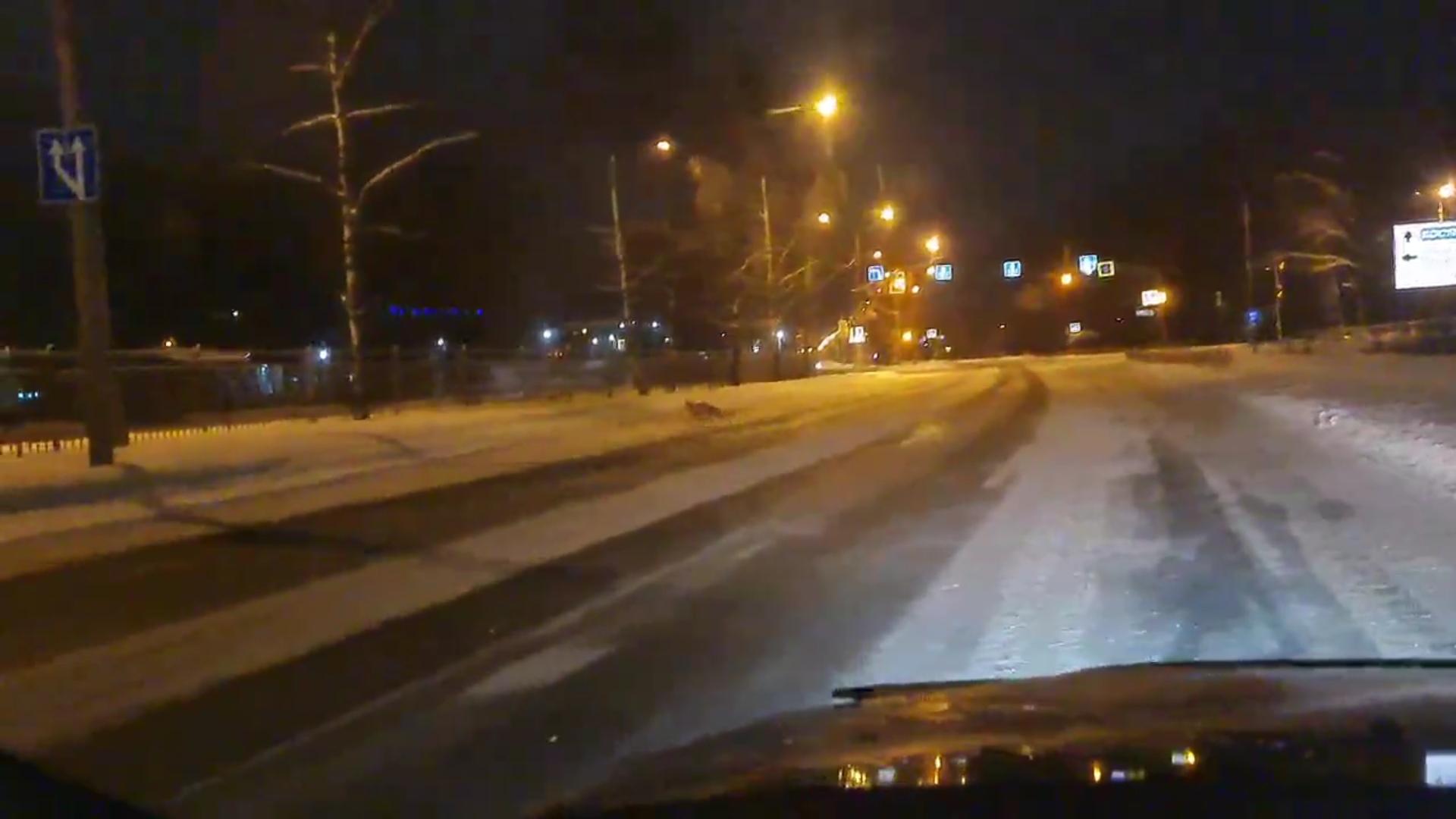 В Ярославле на видео сняли лисенка, перебегающего проспект ранним утром