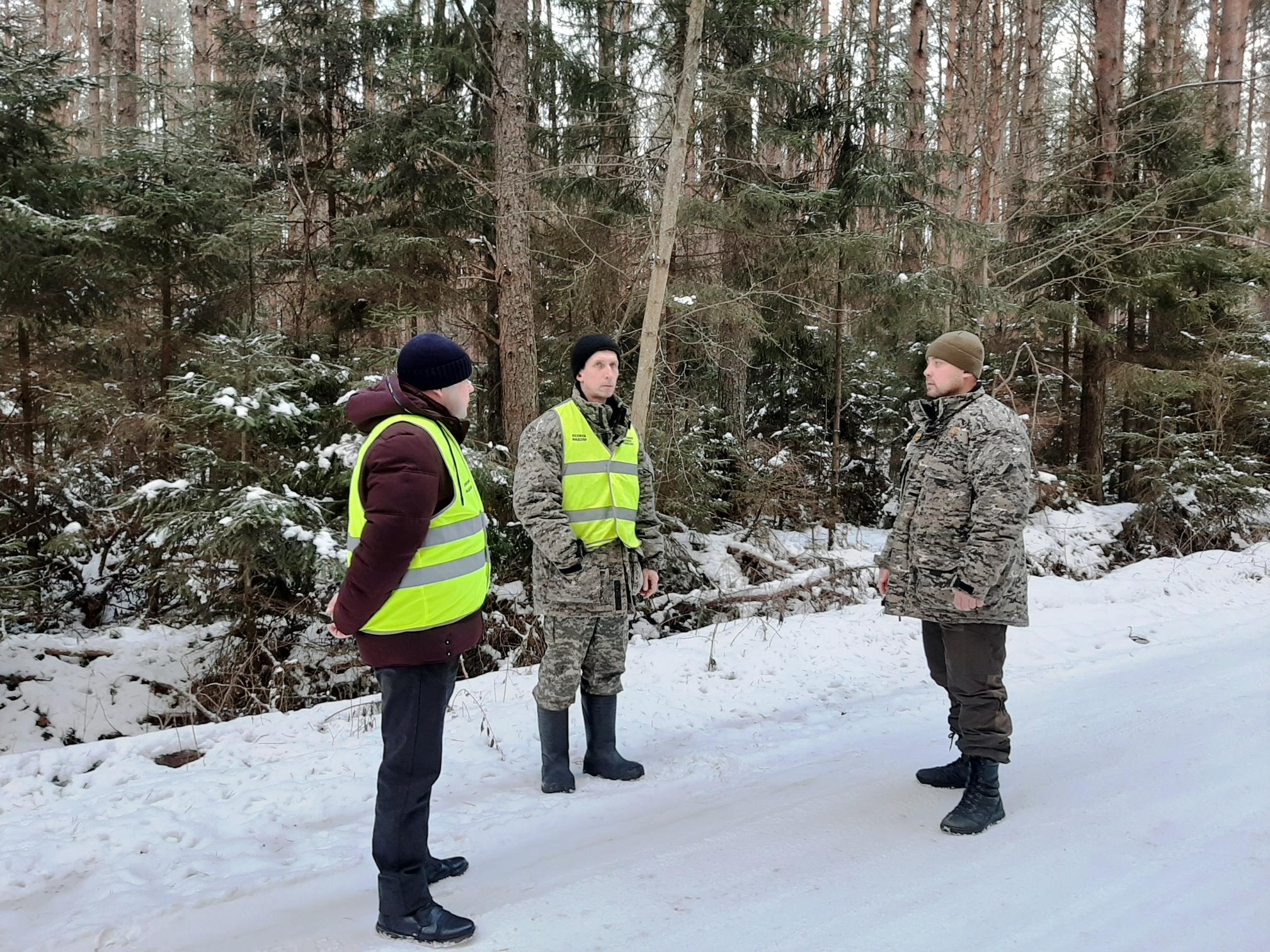 Более 300 рейдов провели в Ярославской области в праздники для предотвращения незаконных рубок елей