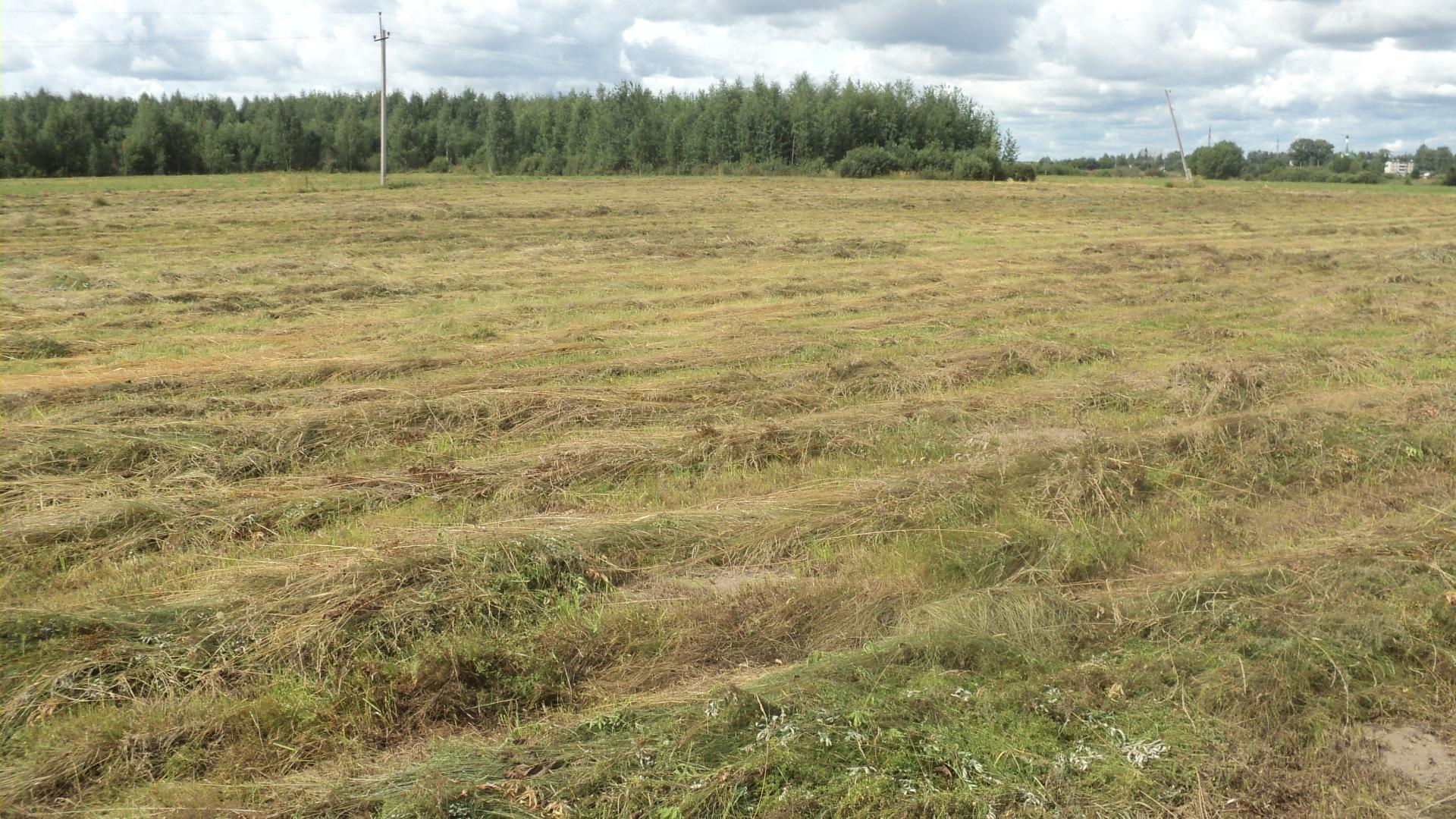 Началась актуализация кадастровой стоимости земель сельхозназначения