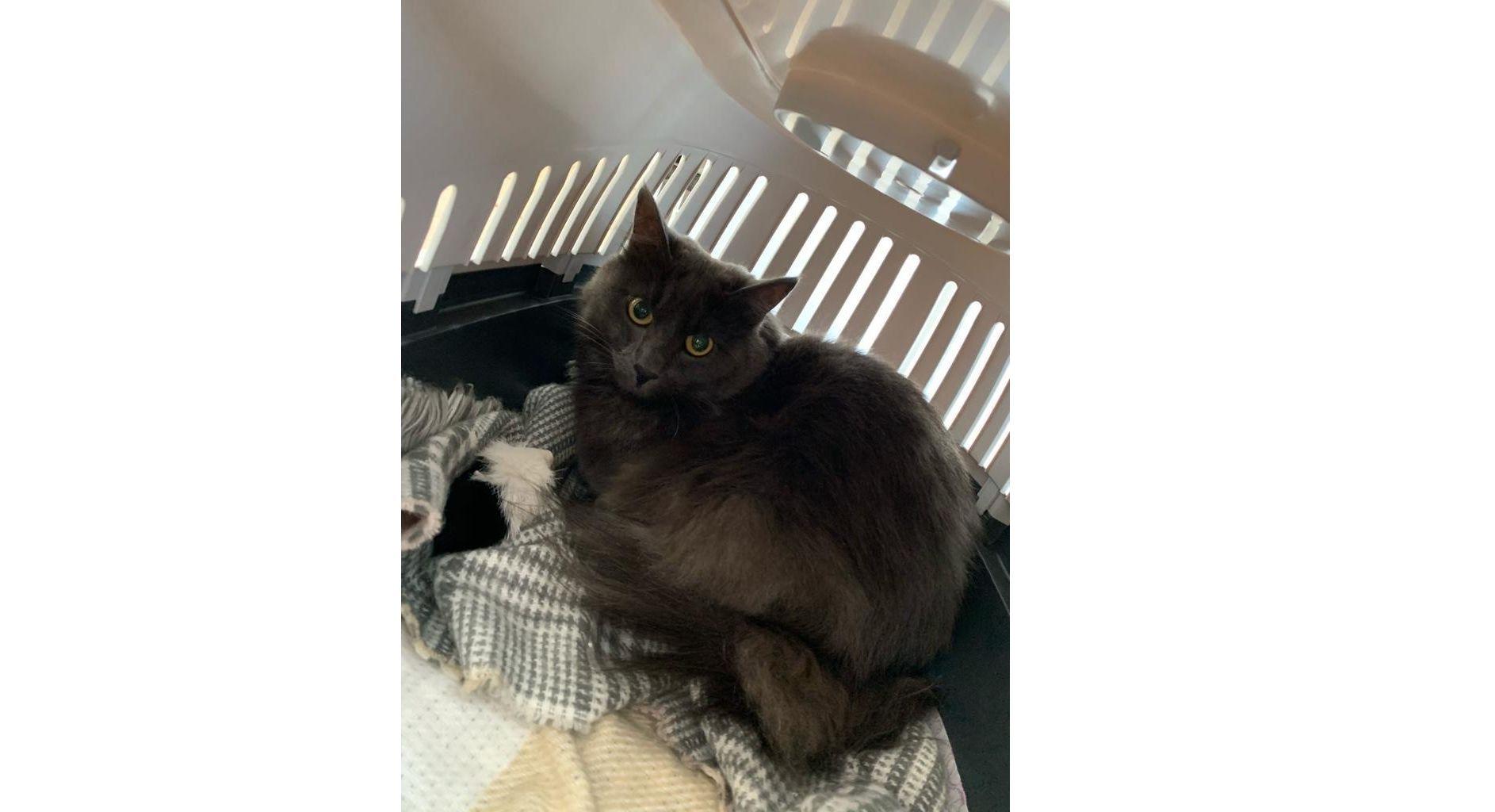 Спустя пять месяцев в Ярославле нашли сбежавшего в аэропорту кота