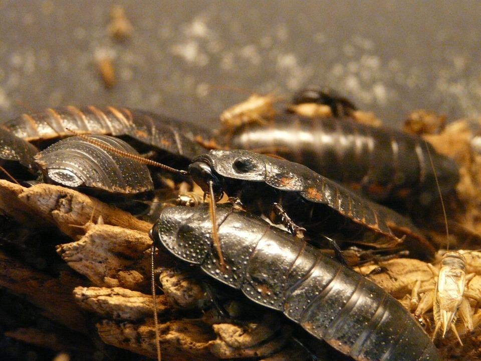 Роспотребнадзор предупредил ярославцев о возможном нашествии тараканов