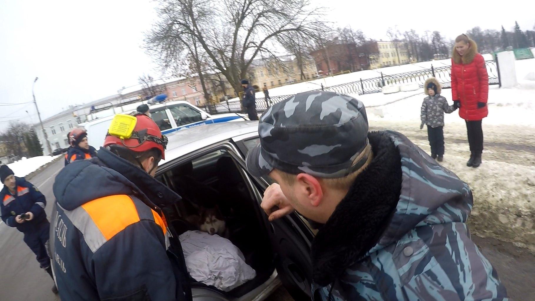 В Ярославле собака оккупировала чужую машину: спасатели пришли на помощь женщине с ребенком