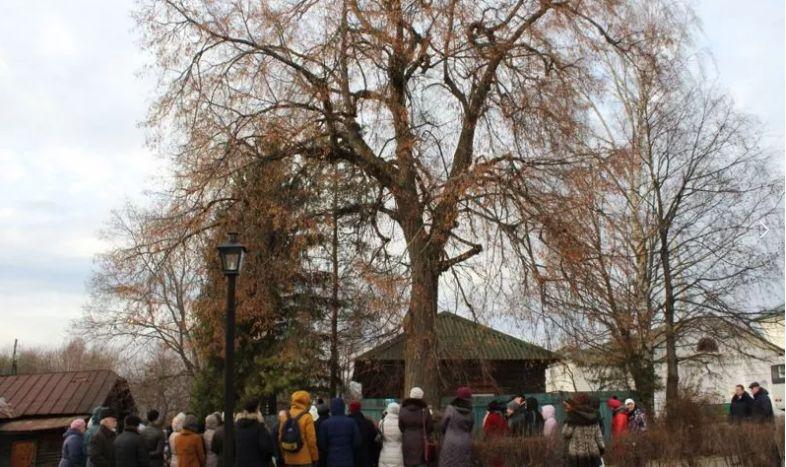 Жителей Ярославской области приглашают принять участие в голосовании за «Европейское дерево года – 2021»