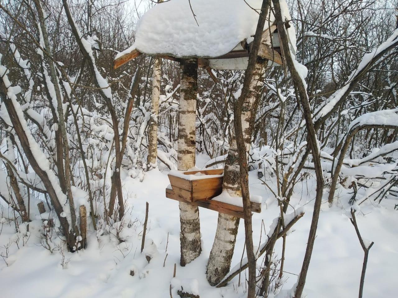 Более 6 тысяч тонн кормов и 170 тонн соли ежегодно выкладывают в ярославских лесах для диких животных