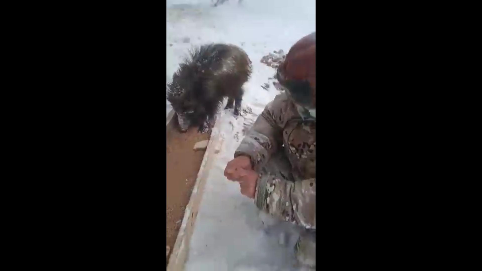 В Ярославской области спасли от голодной смерти шестерых осиротевших кабанят