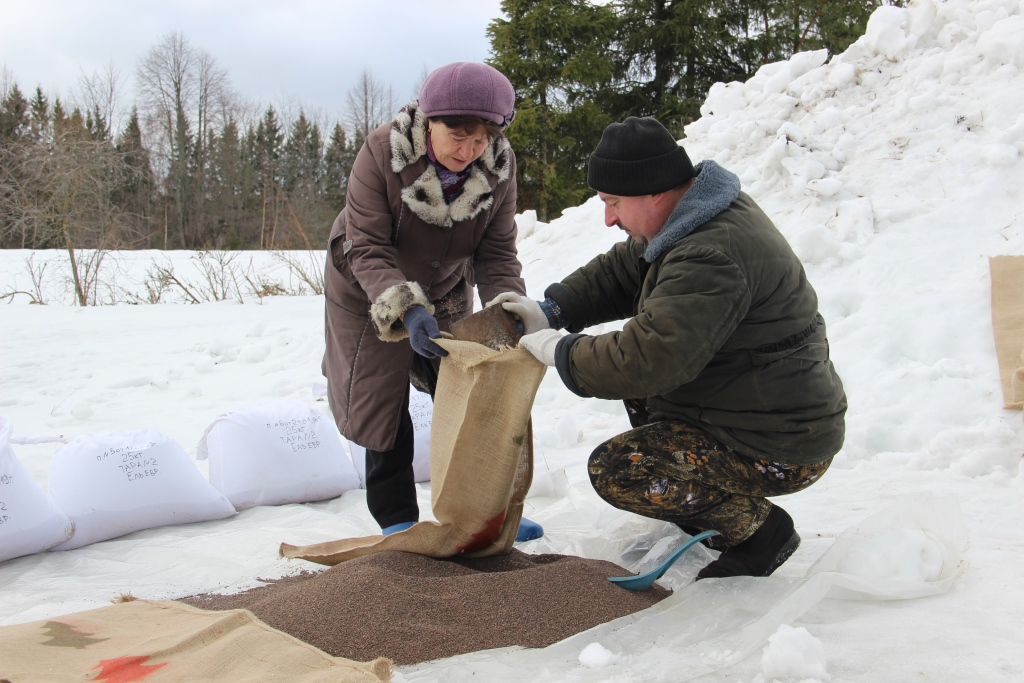 В Ярославской области начался процесс подготовки лесосеменного сырья для посадки в питомниках