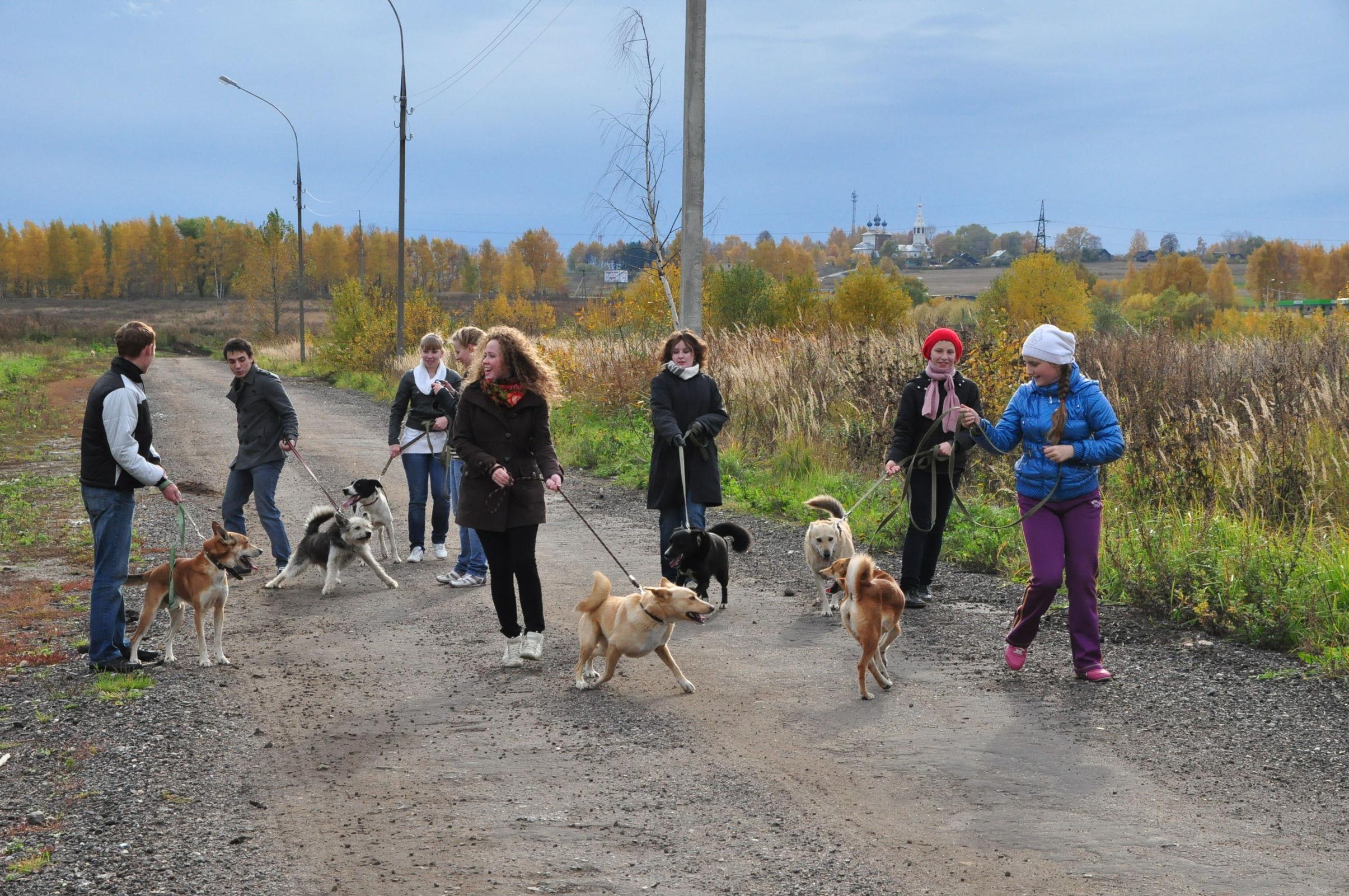 В вопросе выгула собак сохраняется правовой вакуум: мэрия опубликовала список площадок для прогулок с животными