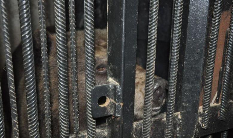 В Ярославском зоопарке проснулись братья-медведи Топа и Умка