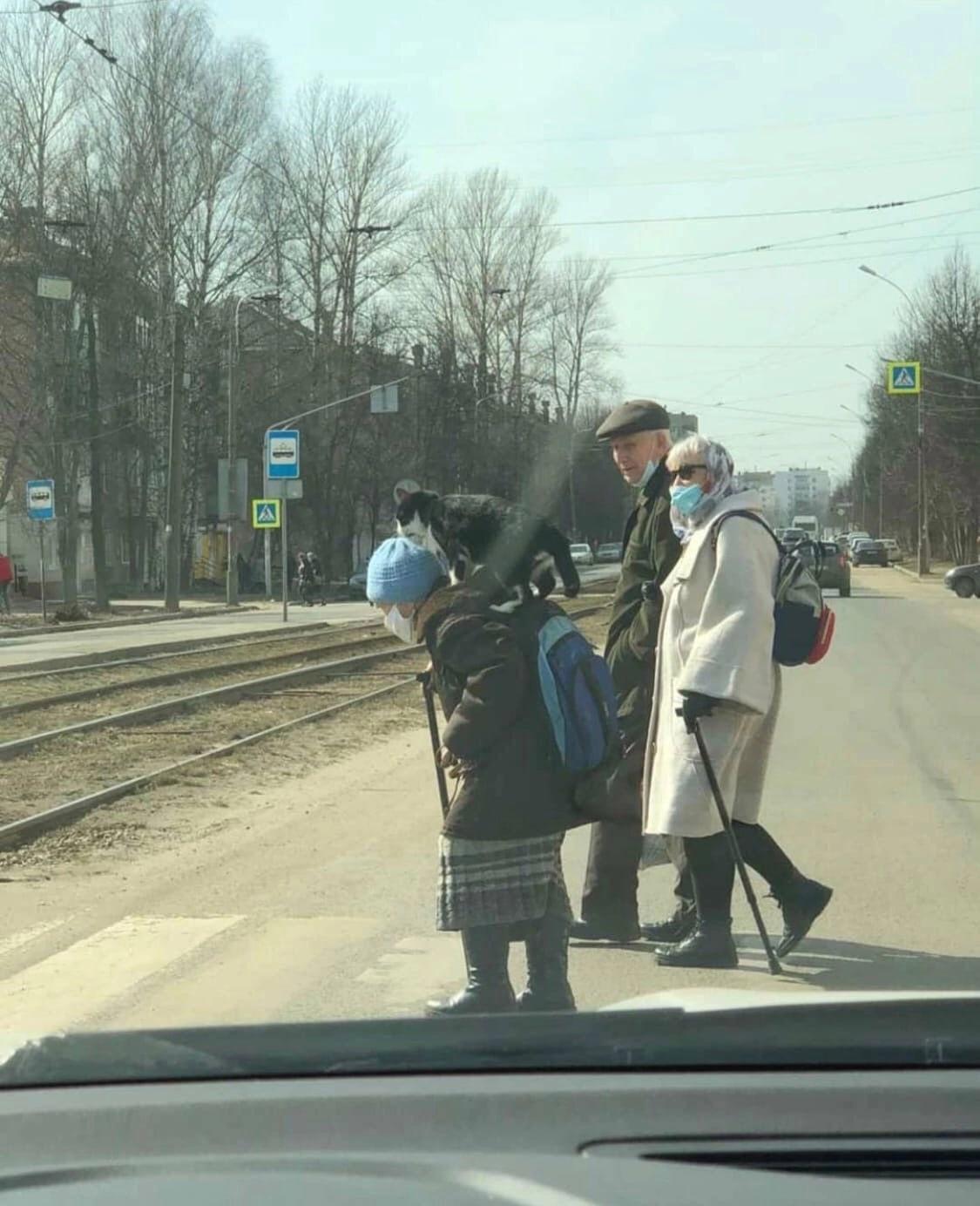 Ярославская бабушка с кошкой на плечах прославилась в соцсетях
