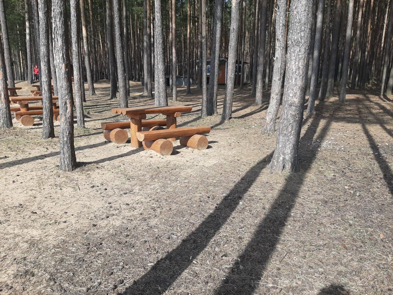 Около 200 мест отдыха благоустроят в лесах Ярославской области в этом году