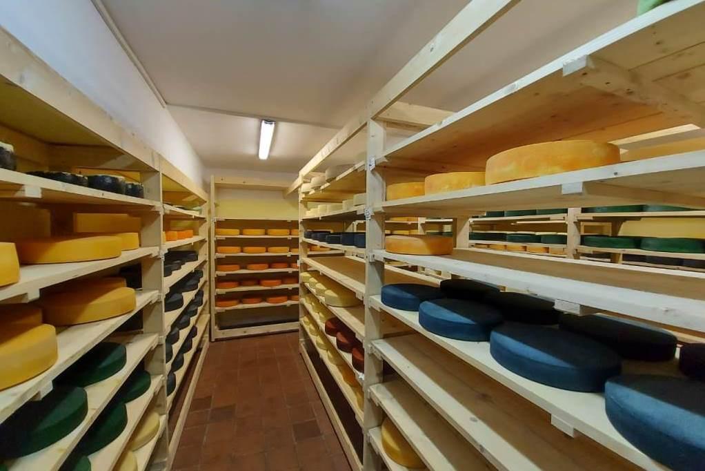 30 сортов сыра по французской технологии производят в Ростовском районе