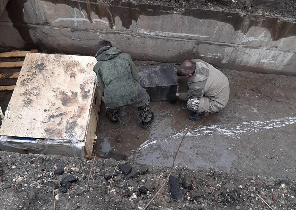 В Ярославской области спасли бобра, попавшего в канал теплотрассы