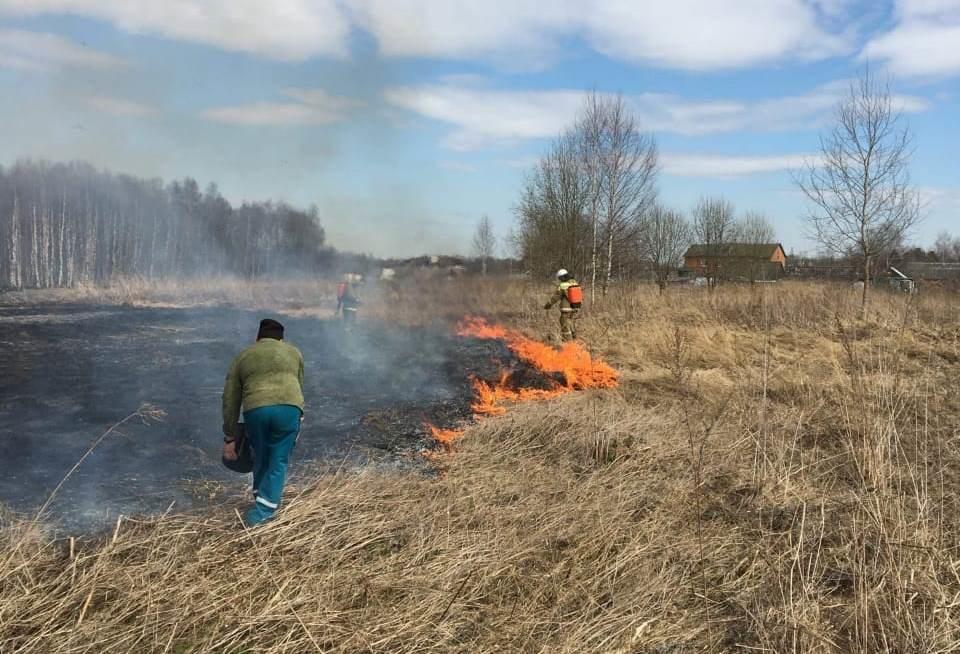 800 возгораний за апрель: ярославцам перед майскими праздниками напомнили о правилах поведения в лесу