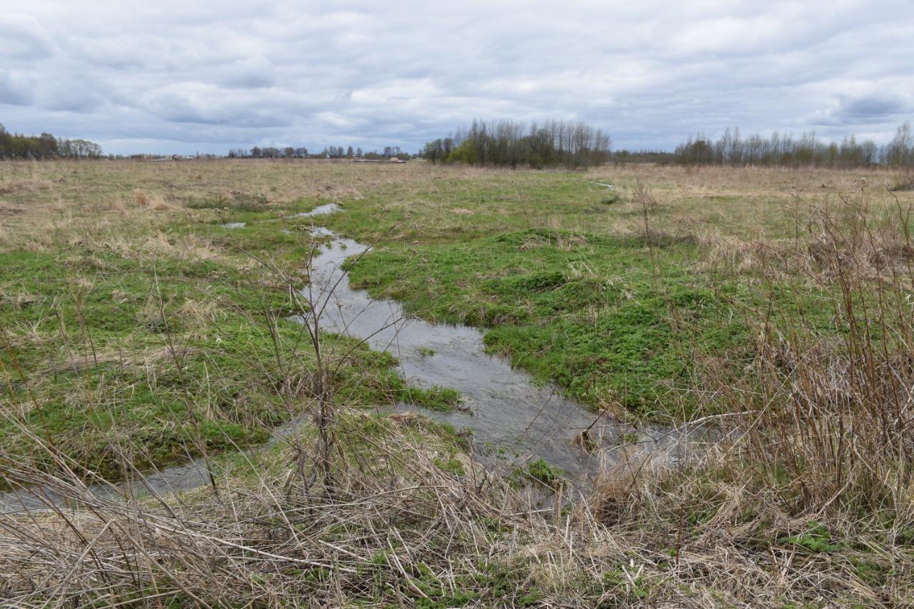 В Ярославском районе провели проверку по факту загрязнения водных объектов стоками с сельхозпредприятий