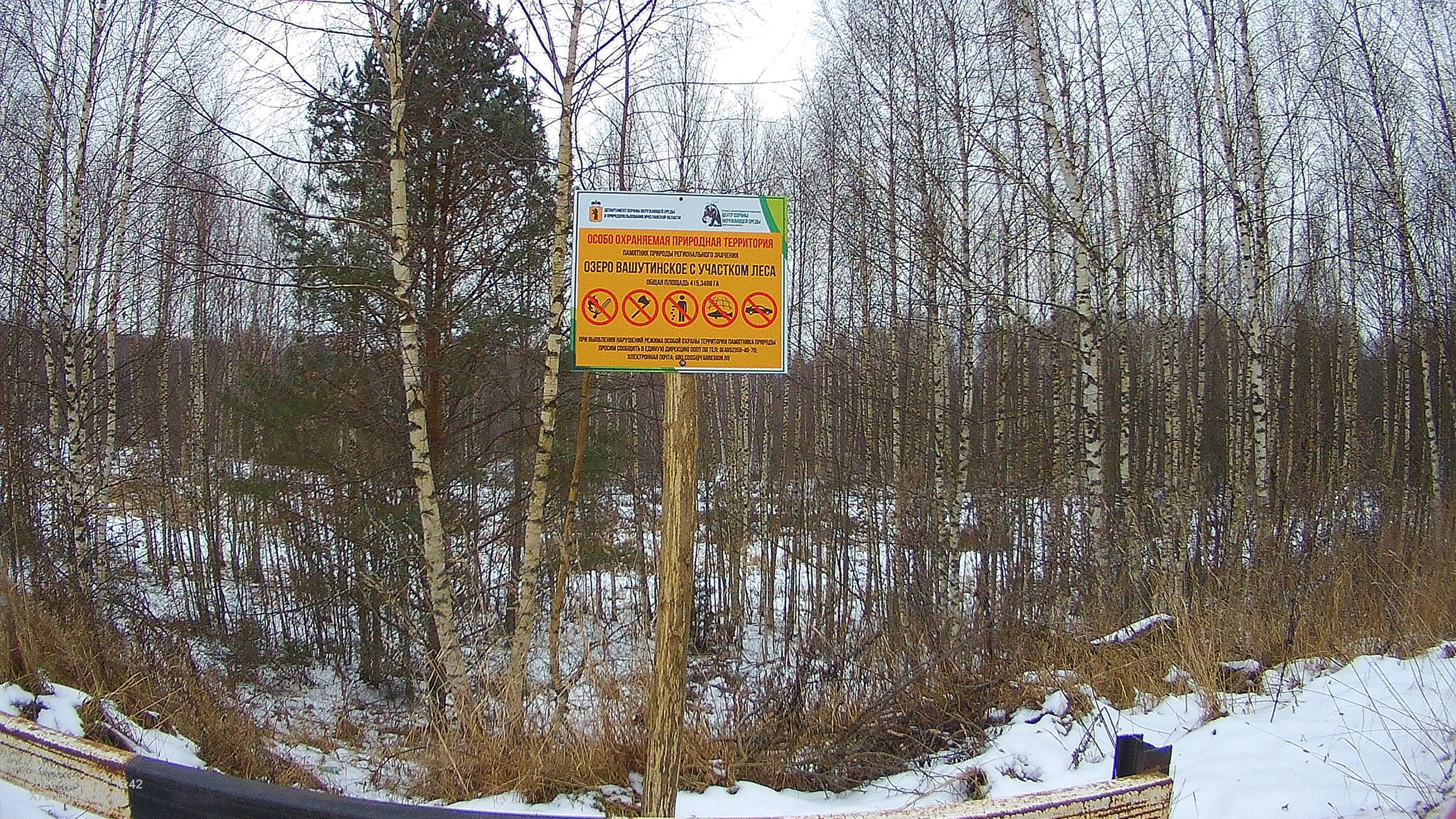 В Ярославской области предотвратили незаконное строительство дороги на территории памятника природы «Озеро Вашутинское»