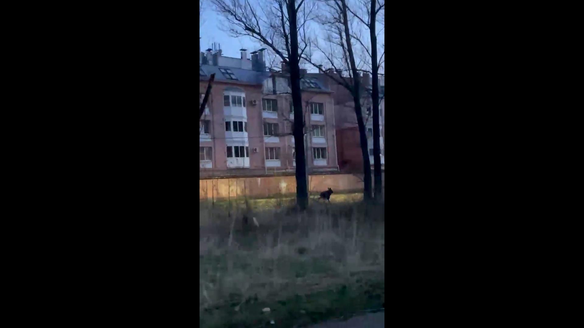 В Ярославле сняли на видео пробегающего мимо жилых домов лося