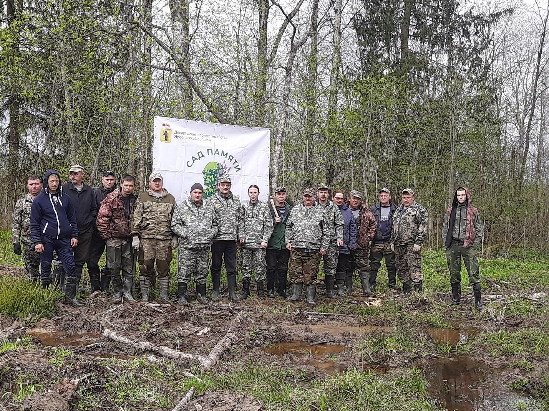 Около 9 тысяч елей посадили в Тутаевском лесничестве в рамках международной акции «Сад памяти»
