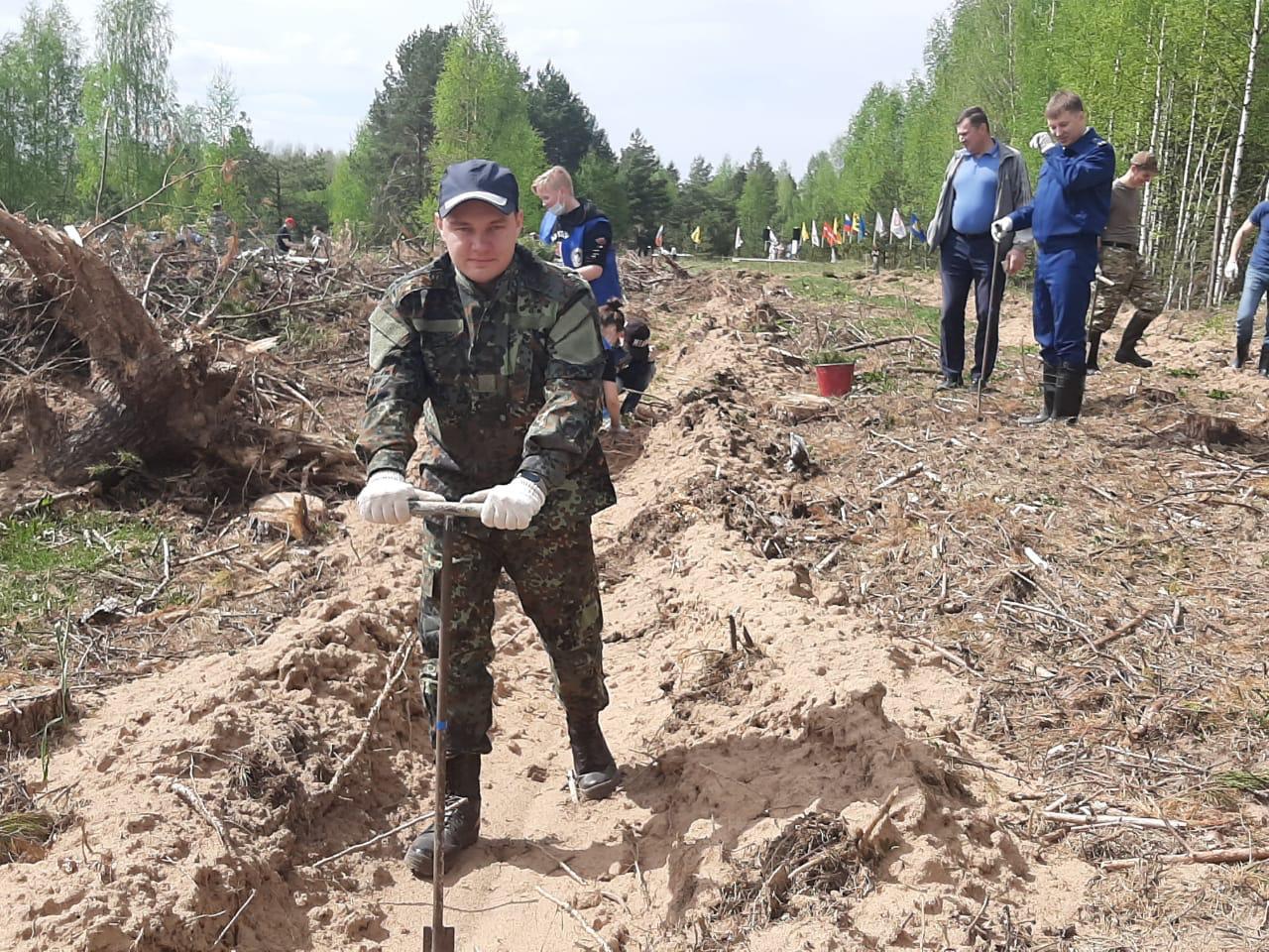 Молодые ели высадили в память о маршале Федоре Толбухине у поселка Красный Профинтерн