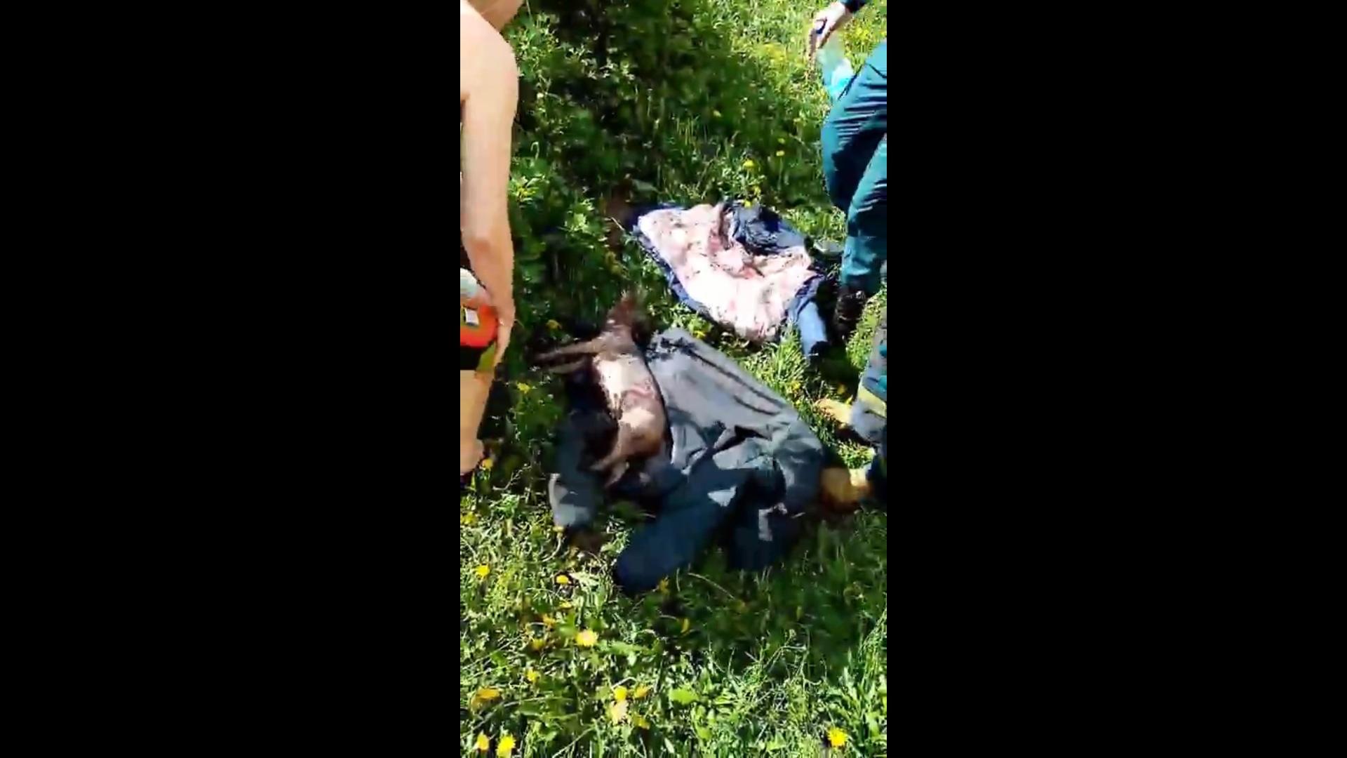В Дзержинском районе Ярославля пожарные спасли из загоревшейся квартиры собаку