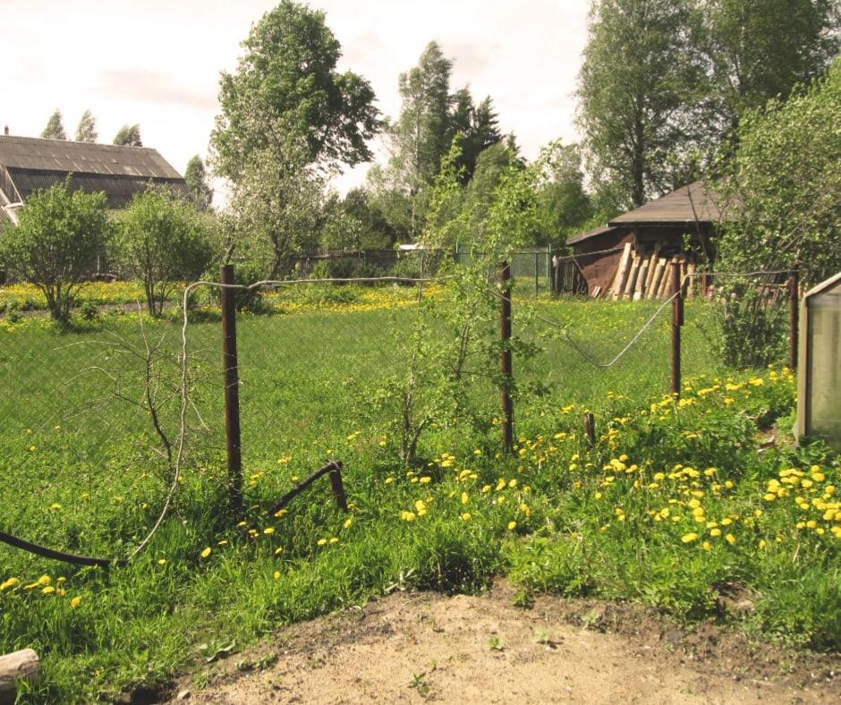 Житель Ярославской области несколько раз выстрелил в пожилую соседку, а потом покончил с собой