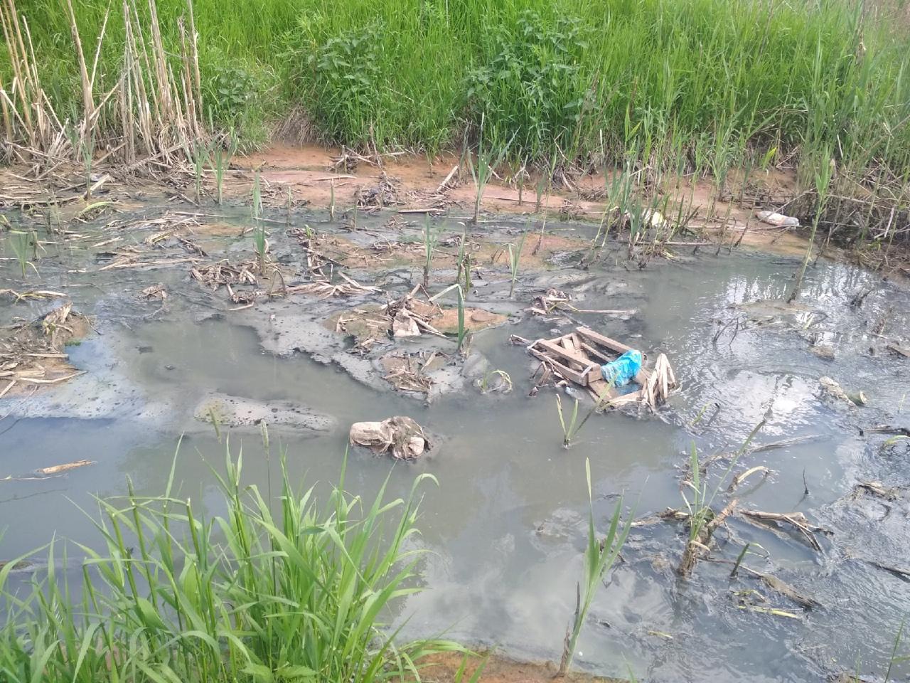 В Ярославле провели проверку по факту загрязнения Пятовского ручья