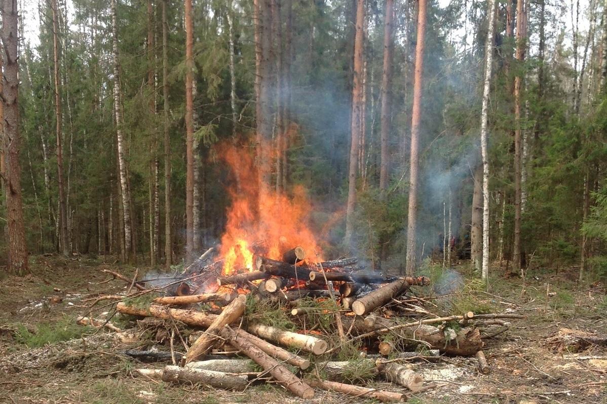 Более 1,2 млн рублей штрафов заплатят нарушители правил пожарной безопасности в лесах