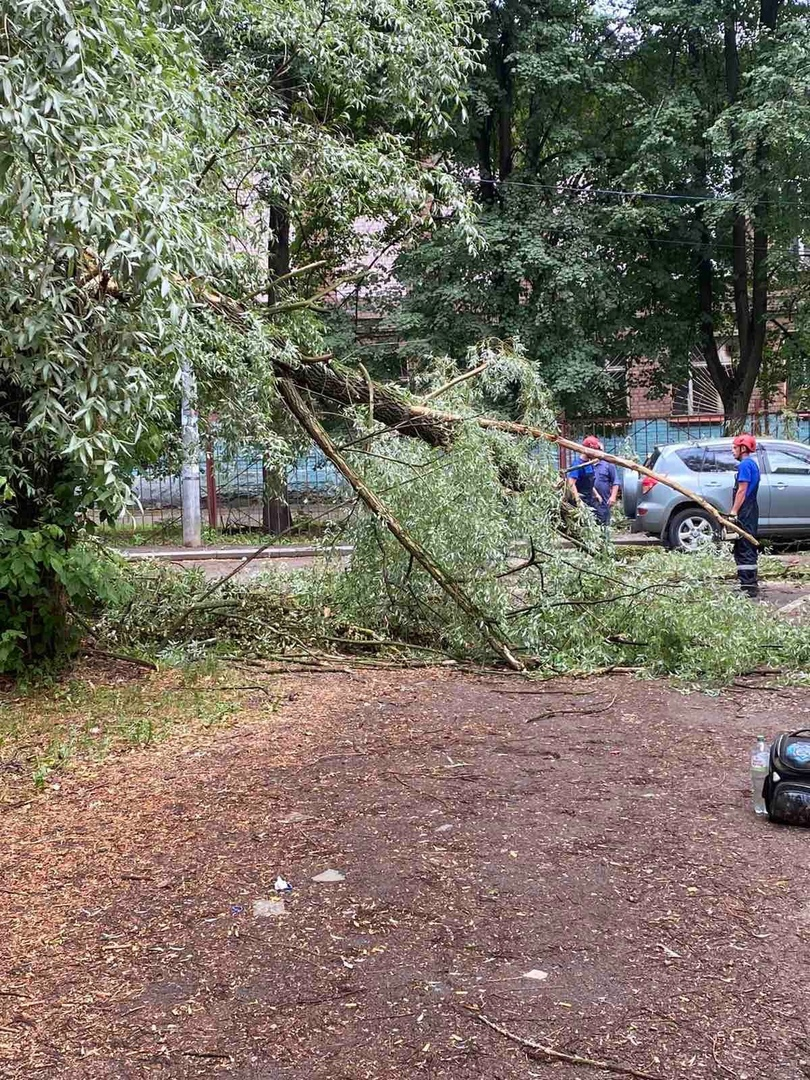 Сильный ветер во время грозы в Ярославле валил деревья: кадры