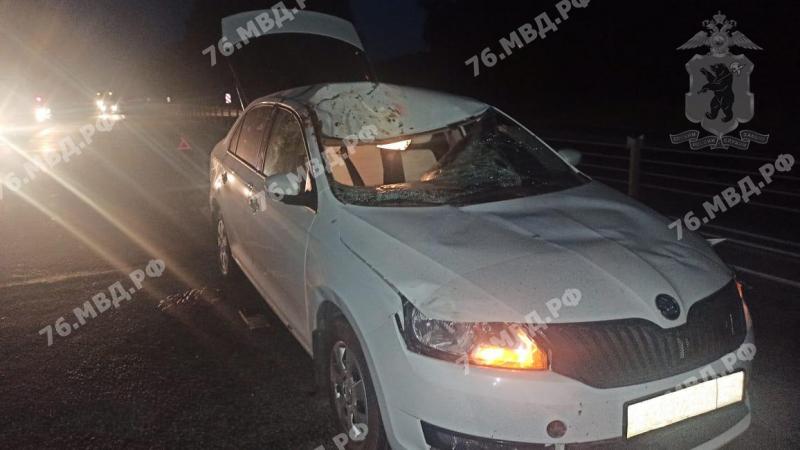 В Рыбинске в ДТП с лосем пострадала девушка