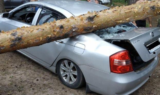 На Прусовских карьерах в Ярославле на машину упало дерево