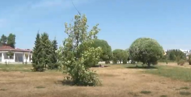 В мэрии Ярославля рассказали, почему в городе высохла трава