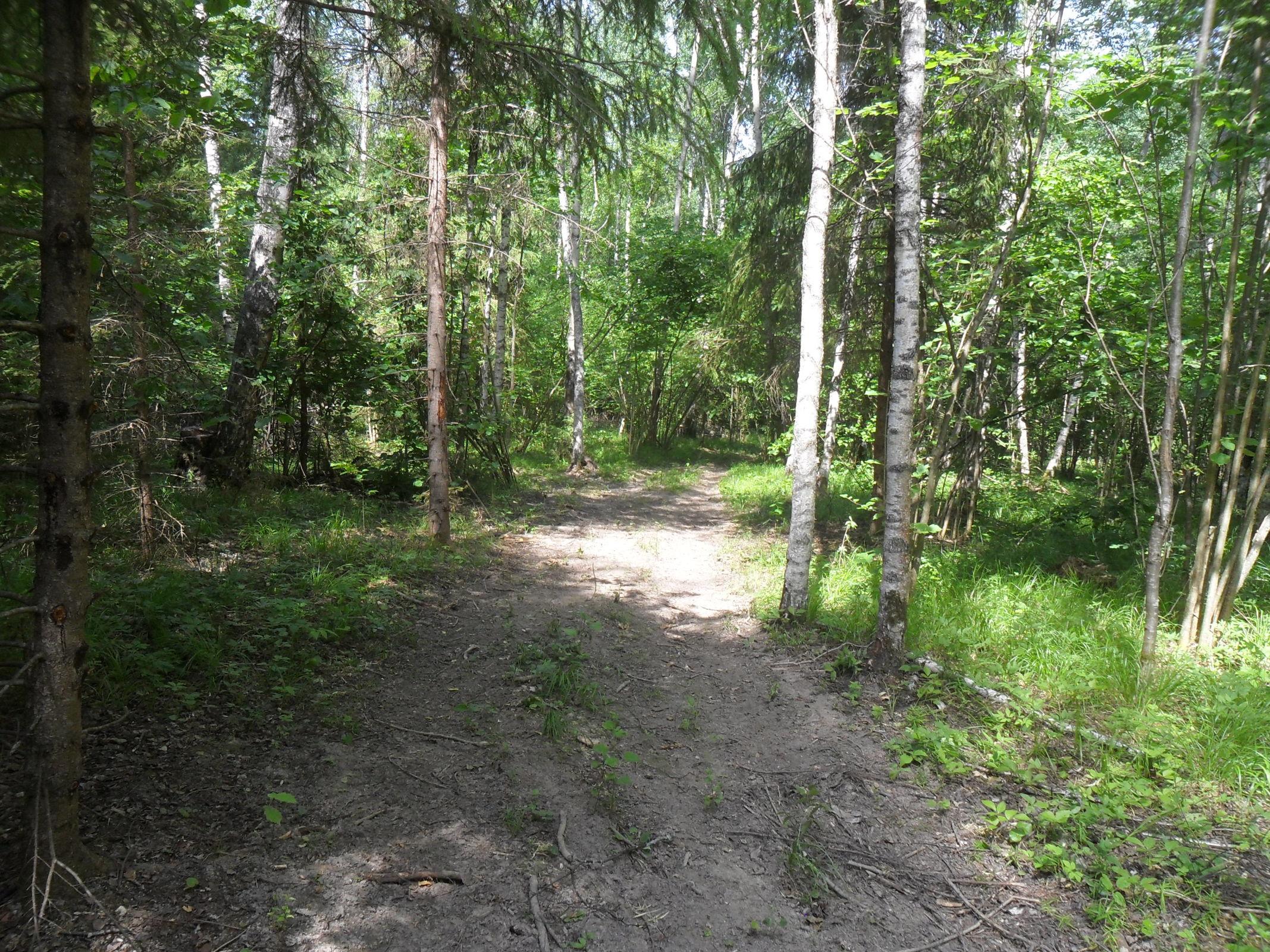 В Ярославской области казаки приняли участие в проверке лесосек