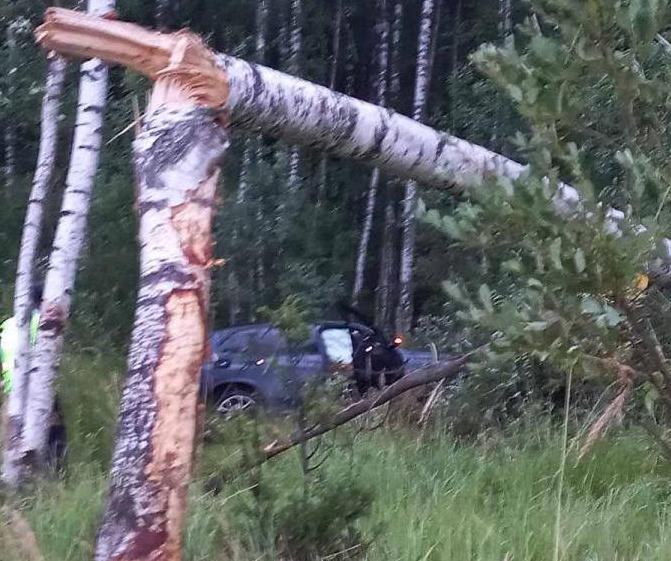 В Ярославской области в ДТП с лосем погиб водитель BMW